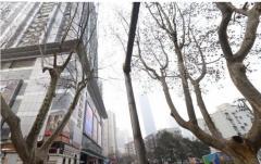 珠江路地铁口 新世界中心 办公精装 145平245平345平