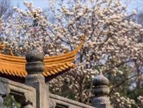 【3月会员中心】春风万里,草木初盛,正是踏青好时节!出游必备神器和赏花宝典都在这里哦!快抢先领取吧!