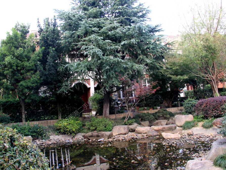 伟星香樟城市花园,五一广场边
