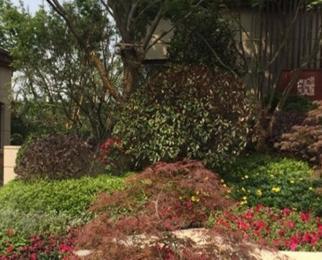 龙誉花园2室1厅1卫75平米整租简装