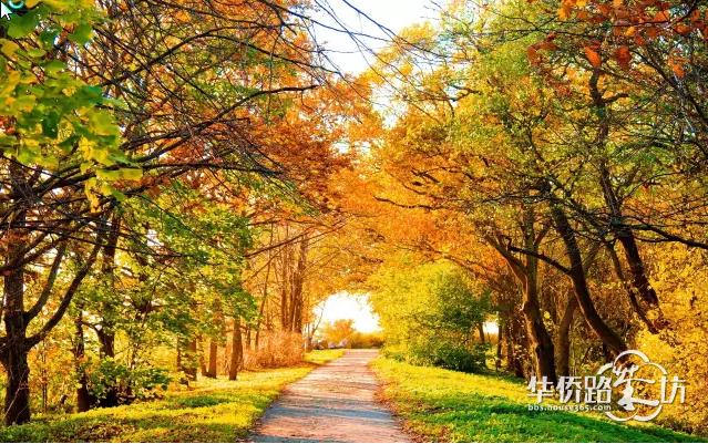 许多年前的故园的秋天是稻花香与蚂蚱的秋天在忙碌和汗水支撑起的珍珠般的米的天下在秋风中闪闪发亮 许多年前的故园的秋天是烤红薯烧包谷与洋芋饭的秋天在跳动的火苗中吧唧着一张张渴望的嘴大吃特吃后不会拉肚子的秋天 许多年前的故园的秋天是鲫鱼肆意畅游于谷子棵里的秋天在放学之余随便到河里湖边胡乱一摸也能搞到半盆子鱼虾的秋天在一条条黄鳝与泥鳅从手中滑落到地上哈哈大笑的秋天 而今故园的秋天是大蒜豌豆菜花香菜与烟叶撑起的圆角分的秋天在一张张似笑非哭似怒非嗔似风似雨似明似暗似阴似晴富有喜剧意味的脸庞的秋天在市场经济引领下的在开